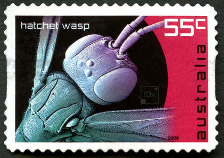 philately: AUSTRALIA - CIRCA 2009: A used postage stamp from Australia, depicting an illustration of a Hatchet Wasp, circa 2009.