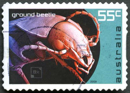 poststempel: AUSTRALIEN - CIRCA 2009: Eine gebrauchte Briefmarke aus Australien, eine Illustration eines Ground Beetle, circa 2009 darstellt. Editorial