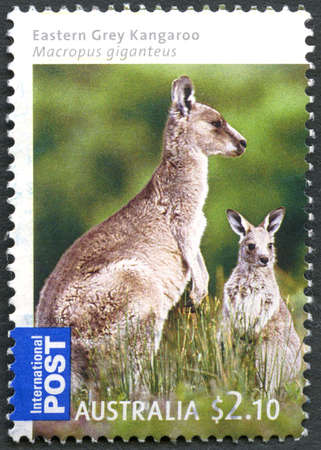 AUSTRALIA - CIRCA 2009: A used postage stamp from Australia, depicting an image of an Eastern Grey Kangaroo with its young, circa 2009.
