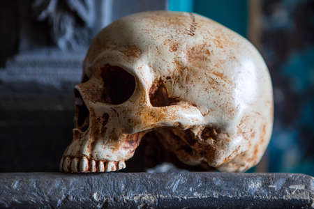 morbidity: A skull on display on top of a mantelpiece.