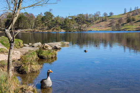 cumbria: The picturesque scenery of Tarn Hows in the Lake District in Cumbria, UK.