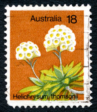 AUSTRALIA - CIRCA 1975: A used postage stamp from Australia, depicting an illustration of the Helichrysum Thomsonii flower, circa 1975. Editorial