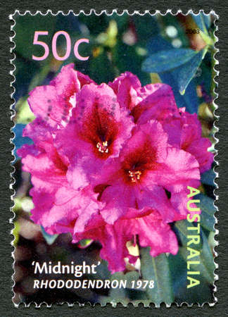 AUSTRALIA - CIRCA 2003: A used postage stamp from Australia, depicting an image of the Rhododendron named Midnight, circa 2003.