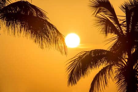 A view of the Sun shining through the Palm Trees in an exotic location.