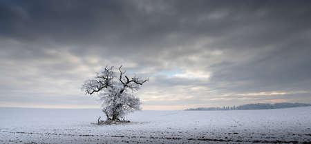 겨울날의 그립 스톡 콘텐츠