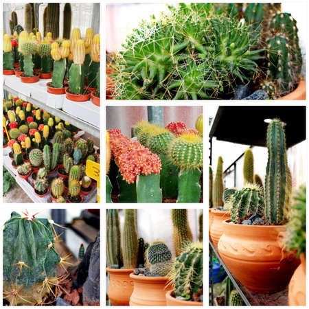 Cactus variety collage Stock Photo - 10877704