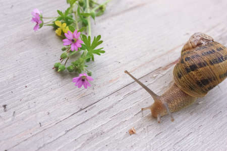 A close up shot of a snail and some purple flowers on a wood table Zdjęcie Seryjne