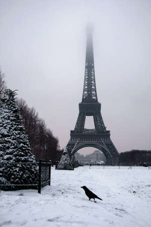 Crow in front of the Eiffel tower photo