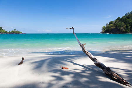 Driftwood on a tropical beach Stock Photo