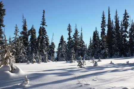 basin mountain: Trees poking through deep snow