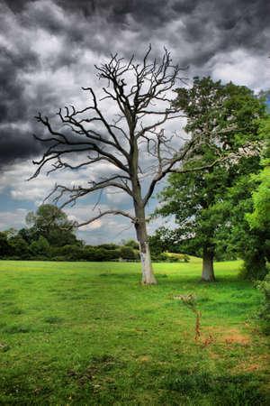 不機嫌そうな空の下で死んだ木