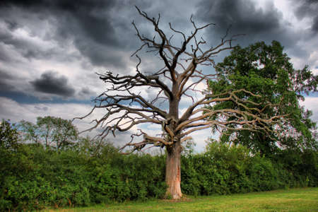 Dead tree under a moody sky Stock Photo - 10442844