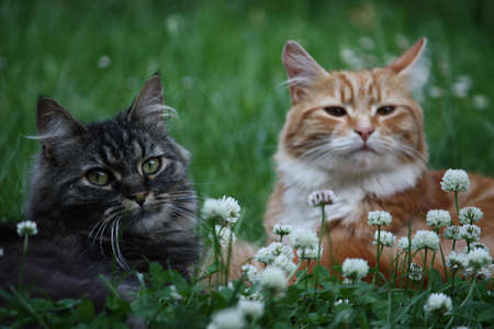 Best friends - tabby and ginger kittens Stock Photo - 10431938