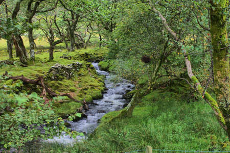 Forest stream Stock Photo - 10576414
