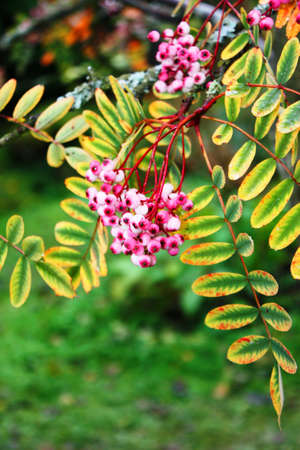 pink flowers on green leaves