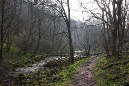 wooded: a river running through a wooded valley