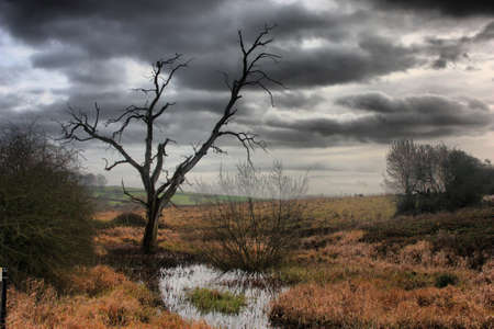 a dead tree against a moody grey sky Stock Photo - 18194298