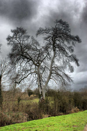 Magnificent tree against a moody grey sky Stock Photo - 18194300