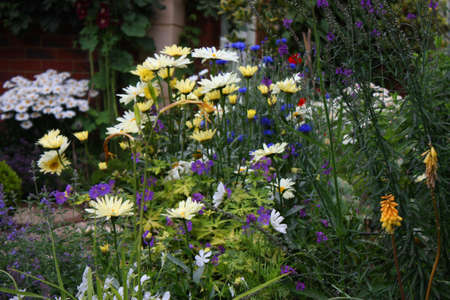 beautiful pretty plants in a garden environment Stock Photo