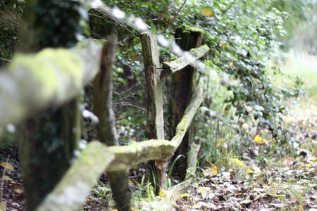 rickety: an old broken rickety wooden fence
