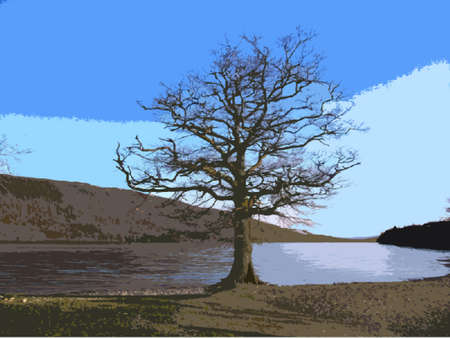 lake district: a tree in front of a calm coniston water