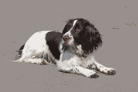 lie down: liver and white working type english springer spaniel lying on a sandy beach Illustration