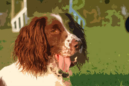 very: a very cute liver and white working type english springer spaniel pet gundog