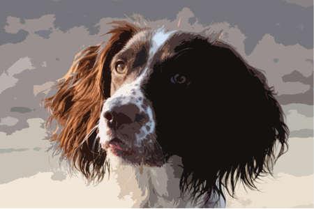 puppydog: Close up of a working type english springer spaniel pet gundog