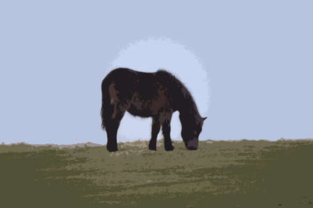exmoor: Exmoor pony out in the wild