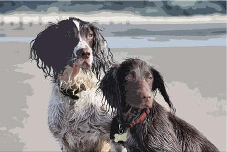 cocker: eine Arbeitstyp Englisch Springer und Cocker Spaniel sa�en zusammen an einem Sandstrand
