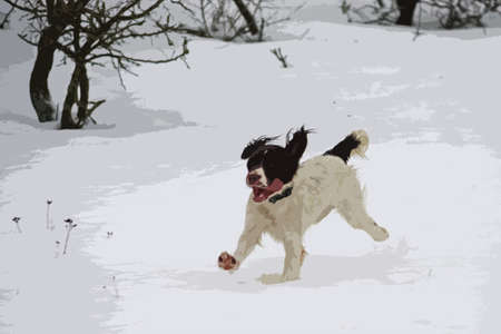 puppydog: Working springer spaniel pet gundog playing in the snow