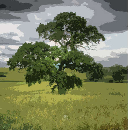 large tree in field under cloudy sky