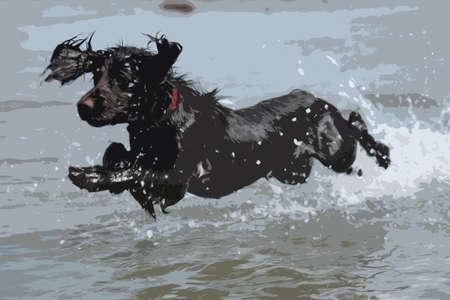 cocker: eine nasse junge braune Arbeitstyp Cocker Spaniel Welpe sprang ins Meer