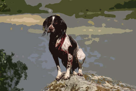 doggies: a very cute liver and white working type english springer spaniel pet gundog posing on a rock