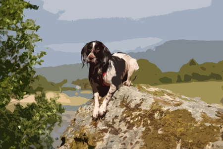 puppydog: a very cute liver and white working type english springer spaniel pet gundog posing on a rock