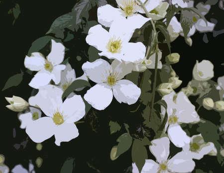on white: Beautiful white flowers Illustration