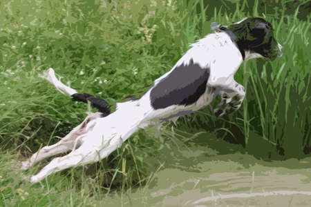 springer spaniel: working type english springer spaniel pet gundog jumping into water Illustration