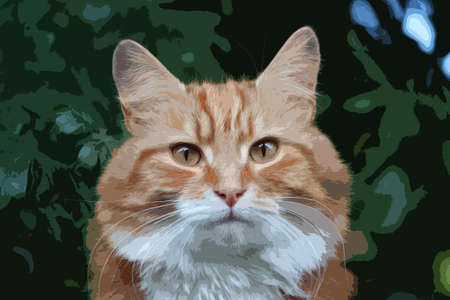 long haired: Beautiful long haired ginger cat