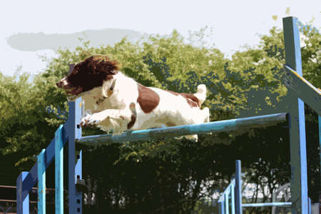 a working type english springer spaniel pet gundog jumping an agility jump Illustration