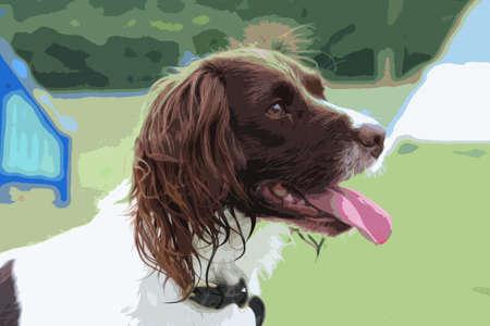 puppydog: working type liver and white english springer spaniel pet gundog