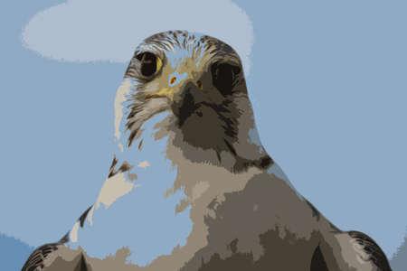 raptor: A beautiful white arctic hawk raptor bird Illustration