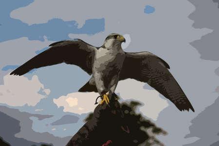 arctic: A beautiful white arctic hawk raptor bird Illustration