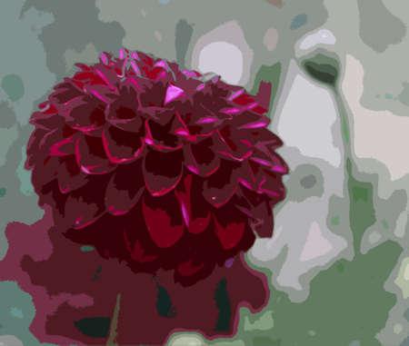 horticulture: Beautiful pink dahlia flower Illustration