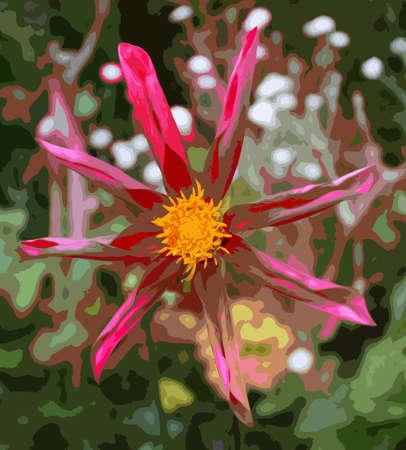horticulture: Beautiful pink dahlia honka Illustration