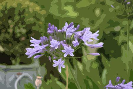 purple flowers: Beautiful blue purple flowers