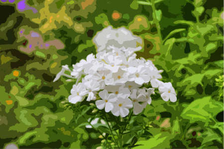 horticulture: Beautiful white flowers Illustration