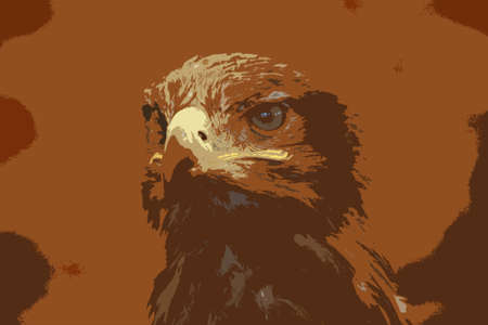 is magnificent: Magnificent golden eagle bird of prey raptor