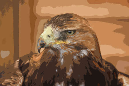 portrait of a magnificent golden eagle
