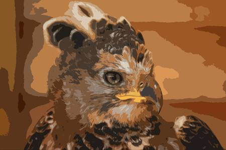 magnificent: a magnificent african crowned eagle Illustration