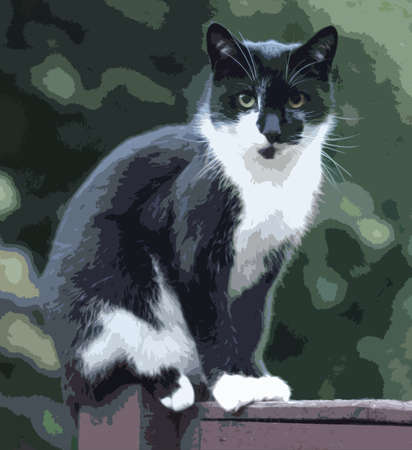 pussycat: beautiful black and white domestic pet cat Illustration